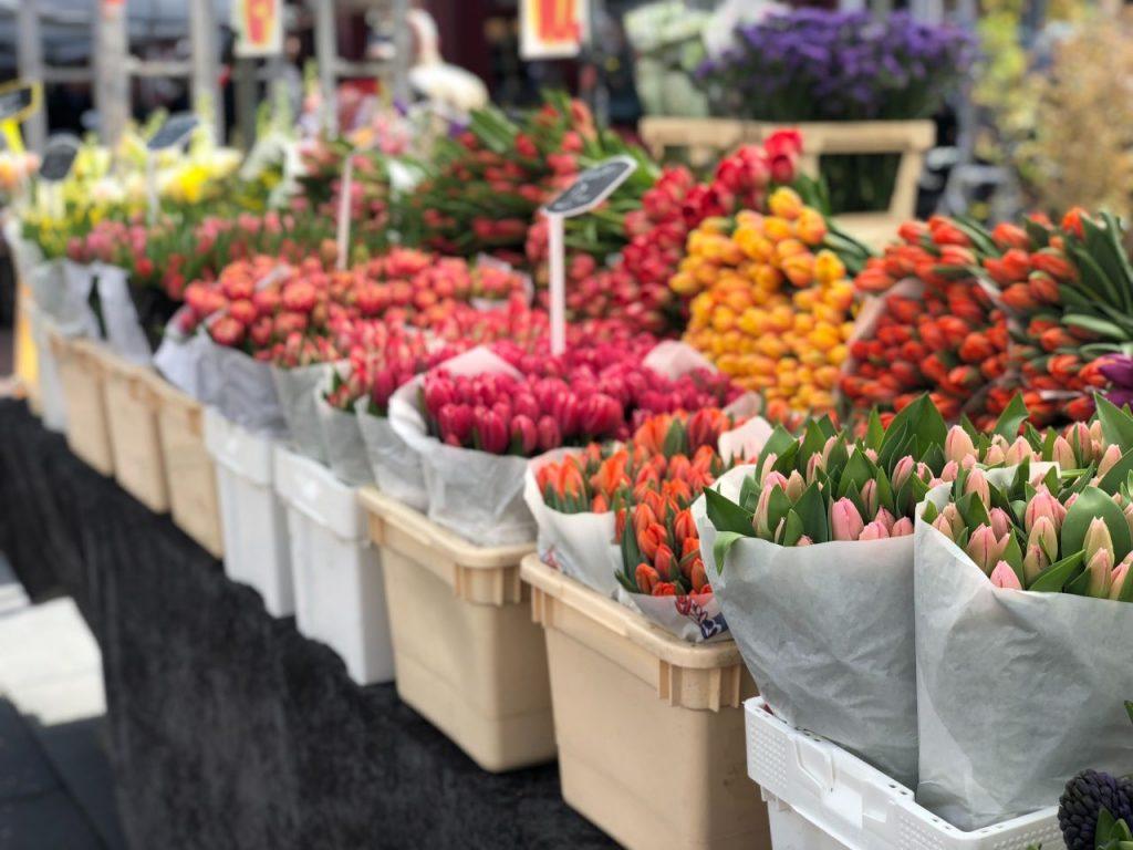 Amsterdam Marché aux fleurs - Tulipes